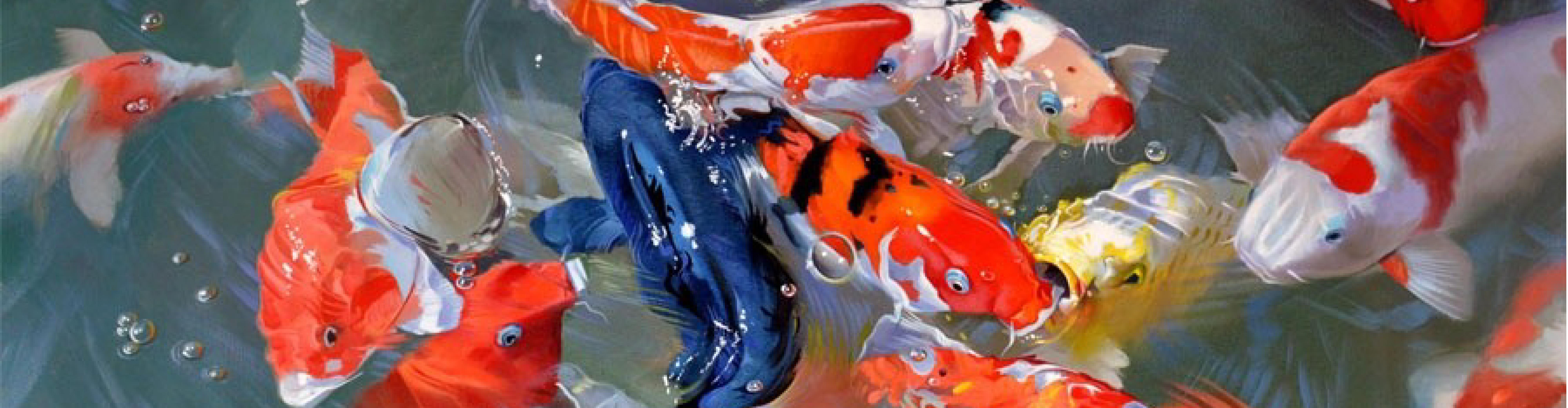106 alimentation poisson l 39 alimentation des poissons for Alimentation poisson rouge bassin