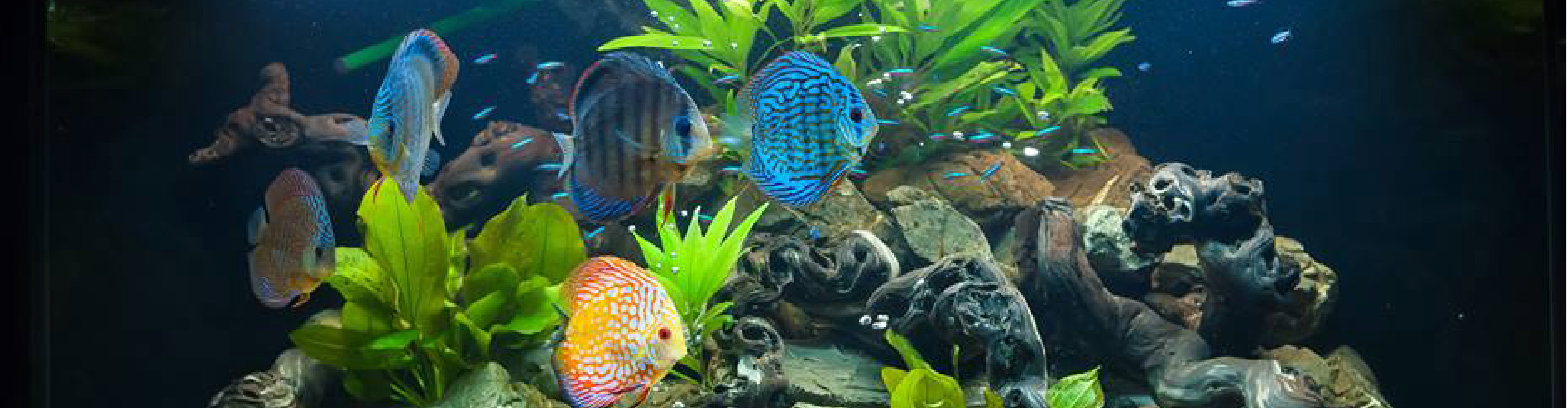 Pierres de d coration beach for Poisson decoration aquarium